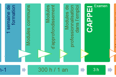 Cappei formation